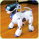 AIBO-Name:Rookie